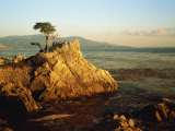 Lone Cypress Tree on Rocky Outcrop at Dusk, Carmel, California, USA Photographic Print by Howell Michael