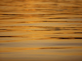 Calm Water Reflecting Dusk Light, Tysfjord, Arctic Waters, Polar Regions Photographic Print by Dominic Harcourt-webster