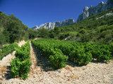 Cotes De Rhone Vineyards, Dentelles De Montmirail, Vaucluse, Provence, France, Europe Photographic Print by David Hughes