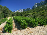Cotes De Rhone Vineyards, Dentelles De Montmirail, Vaucluse, Provence, France, Europe Photographic Print by Hughes David