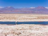Flamingo Breeding Site, Laguna Chaxa, Salar De Atacama, Atacama Desert, Norte Grande, Chile Photographic Print by Gavin Hellier