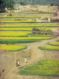 Village Near Rawalpindi, Pakistan Photographic Print by Harding Robert
