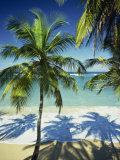 Palm Trees on Tropical Beach, Dominican Republic, West Indies, Caribbean, Central America Fotografisk trykk av Harding Robert