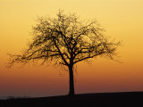 Bare Tree Silhouetted at Dawn, Dordogne, France, Europe Photographic Print by Hodson Jonathan