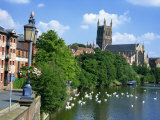 Swans on the River Severn and Cathedral, Worcester, Worcestershire, England, United Kingdom, Europe Photographic Print by Hughes David