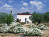 Summer Flowers in Front of a White Walled Spanish Villa in Valencia, Spain, Europe Photographic Print by Mawson Mark