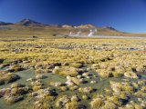 El Tatio Geyser in the San Pedro De Atacama, Chile, South America Photographic Print by Mcleod Rob