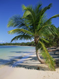 Palm Tree on Tropical Bavaro Beach, Dominican Republic, West Indies, Caribbean, Central America Photographic Print by Lightfoot Jeremy