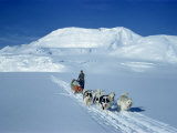 Dog Sleigh Team, Antarctica, Polar Regions Photographic Print by Herbert Wally