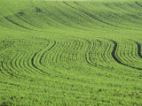 Abstract Landscape of a Green Field Photographic Print by Hodson Jonathan