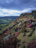 Heather and Rocky Terrain, Froggatt Edge, Derbyshire, England, United Kingdom, Europe Photographic Print by Hunter David