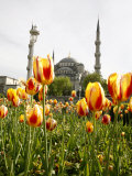 Blue Mosque, Istanbul, Turkey, Europe Lámina fotográfica por Levy Yadid