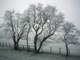 Frost on Trees on Farmland in Winter Photographic Print by Hodson Jonathan