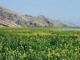 Lake Paresham, Iran, Middle East Photographic Print by Harding Robert