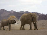 Desert-Dwelling Elephants Showering Dust, Namibia, Africa Photographic Print by Milse Thorsten