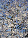 Close-Up of Snow on Branches of Trees in Winter Photographic Print by Hodson Jonathan