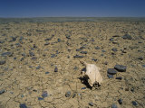 Cracked Earth and Cattle Skull in the Outback of South Australia, Australia, Pacific Photographic Print by Mawson Mark