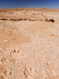 Dinosaur Foot Prints, Arizona, United States of America, North America Photographic Print by Kober Christian