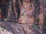 Mules Taking Tourists Along the Colorado River Trail, Grand Canyon, Arizona, USA Photographic Print by Kober Christian