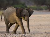 Young Desert-Dwelling Elephant, Namibia, Africa Photographic Print by Milse Thorsten