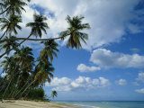 Beach, Barbados, West Indies, Caribbean, Central America Photographic Print by Harding Robert