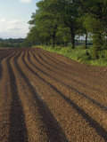 Furrows in a Ploughed Field Near Coleshill in Warwickshire, England, United Kingdom, Europe Photographic Print by Hughes David