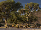 Desert-Dwelling Elephants in Dry River Bed, Namibia, Africa Photographic Print by Milse Thorsten