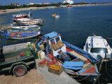 Scala, Agistri, Saronic Islands, Greek Islands, Greece Photographic Print by Lightfoot Jeremy