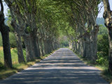Empty Tree Lined Road on the Route De Vins, Near Vaucluse, Provence, France, Europe Photographic Print by Hughes David