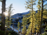 Alpine Larch Trees, Enchantment Lakes, Alpine Lakes Wilderness, Washington State, USA Photographic Print by McCoy Aaron