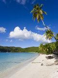 Cinnamon Bay Beach and Palms, St. John, U.S. Virgin Islands, West Indies, Caribbean Photographic Print by Gavin Hellier