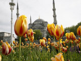 Blue Mosque, Istanbul, Turkey, Europe Photographic Print by Levy Yadid