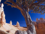 Peekaboo Trail in Bryce Canyon National Park, Utah, USA Photographic Print by Kober Christian