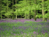 Wild Flowers in Spring, 100 Acres, Forest of Bere, Hampshire, England, United Kingdom, Europe Photographic Print by Legate Jane