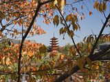 Five-Story Pagoda, Miyajima, Western Honshu, Japan Photographic Print by Schlenker Jochen