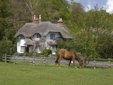 Thatched Cottage and Pony, New Forest, Hampshire, England, United Kingdom, Europe Reproduction photographique par Rainford Roy