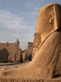 Avenue of the Sphinxes Leading to Luxor Temple, Luxor, Thebes, UNESCO World Heritage Site, Egypt Photographic Print by Mcconnell Andrew