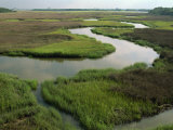 Wetlands of the Cooper River, North Charleston Area, South Carolina, USA Photographic Print by Maxwell Duncan