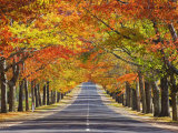 Memorial Avenue in Autumn, Mount Macedon, Victoria, Australia, Pacific Photographie par Schlenker Jochen