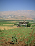 Farmland in the Baka'A Valley, Lebanon, Middle East Photographie par O'callaghan Jane