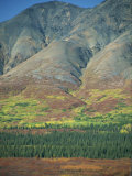 Tundra, Broad Pass, Denali National Park, Alaska Range, Alaska, USA Photographic Print by Waltham Tony