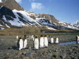 Small Group of King Penguins, with Mountains in the Background, on South Georgia, South Atlantic Photographic Print by Renner Geoff