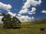 Farmland, Jindabyne, New South Wales, Australia, Pacific Photographic Print by Schlenker Jochen