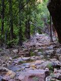 El Questro Gorge, Kimberley, Western Australia, Australia, Pacific Photographic Print by Schlenker Jochen