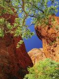 Mini Palms Gorge, Bungle Bungle, Purnululu National Park, Kimberley, Western Australia, Australia Photographic Print by Schlenker Jochen