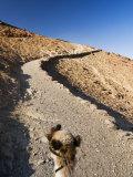 Camel, Mount Sinai, Sinai, Egypt, North Africa, Africa Photographic Print by Schlenker Jochen