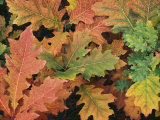 Autumnal Leaves Photographic Print by Woolfitt Adam