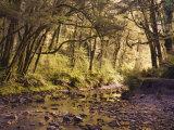 Creek Through Rainforest, Haast Valley, South Island, New Zealand, Pacific Photographic Print by Schlenker Jochen