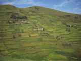 Terraced Fields, Near Kisoro, Uganda, East Africa, Africa Photographic Print by Poole David