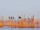 Cormorants and Fishing Nets, Tonle Sap Lake, Siem Reap, Cambodia, Indochina, Southeast Asia Photographic Print by Schlenker Jochen